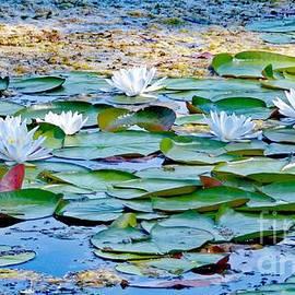 Water Lilies by Elizabeth Duggan