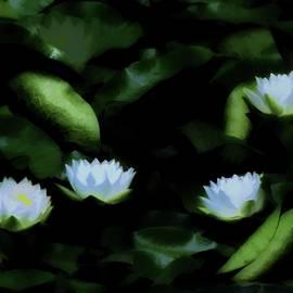 Water Lilies In Bloom by John Feiser