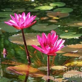 John Clark - Water Lilies
