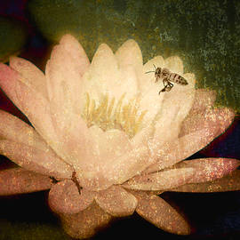 Jerri Moon Cantone - Water Lilly and Bee