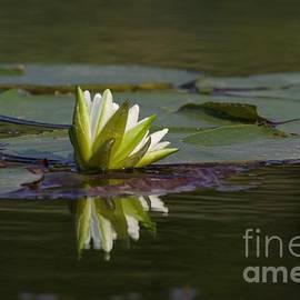 John Franke - Water Lily 2
