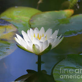 Ruth Housley - Water Lily 3