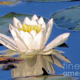 Janice Drew - Water Lily Reflection