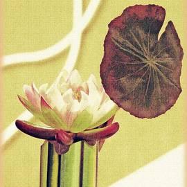 Water Lily Still Life