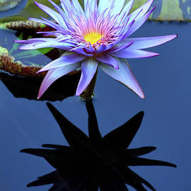 Water Lily with Silhouette Reflection by Teresa Zieba