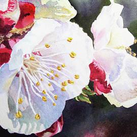 Watercolor Apricot Blossoms - Irina Sztukowski