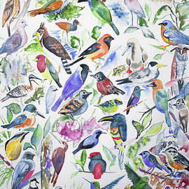 Watercolor - Birds Of Ecuador by Cascade Colors