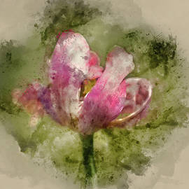 Matthew Gibson - Watercolor painting of Beautiful image of decaying wilted tulip flower at the end of Spring