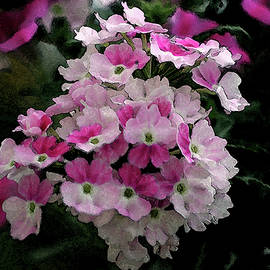 Steven Ward - Watercolor Pink and White Petals 3106 W_2