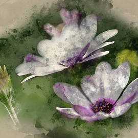 Matthew Gibson - Watercolour painting of Lovely close up image of White Cape Dais