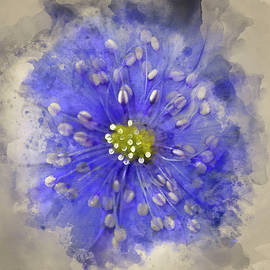 Matthew Gibson - Watercolour painting of Stunning close up of lavender blue flowe