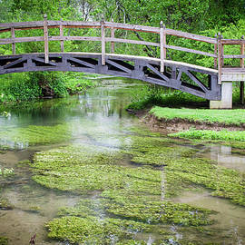 Watercress by Jim Love