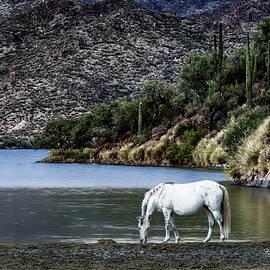 Wild Horse Watering Hole by Janet Ballard