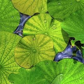 William Wetmore - Waterlilies in HDR
