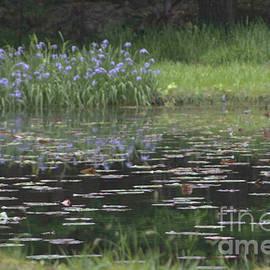 J Bloomrosen - Water Lilies 3