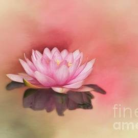 Waterlily by Kathleen Rinker