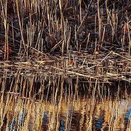 Water's Edge Reflection by Britt Runyon