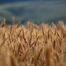 Michael Morse - Waves Of Grain