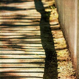 Wavy Shadows by Terry Davis