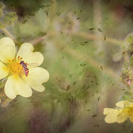 We Call Em' Sweat Bees by Jim Love