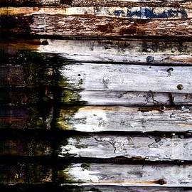 Weathered by the Sea by Debra Banks
