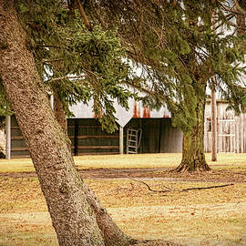 Weathered Shed and Two Trees by William Sturgell
