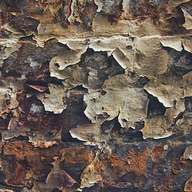 Scott Meyer - Weathered Wall