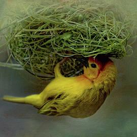 Weaver Bird Building A Nest by Maria Angelica Maira