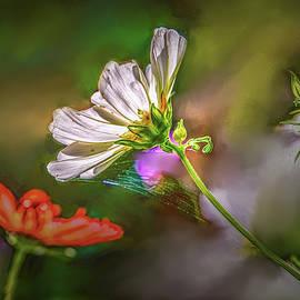 Leif Sohlman - Web on flower #h2