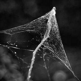 Denise Dube - Web Tent bw