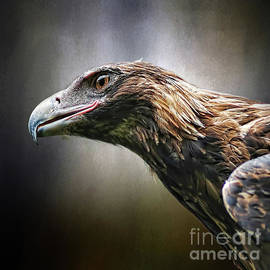 Kaye Menner - Wedge-tailed Eagle Portrait by Kaye Menner