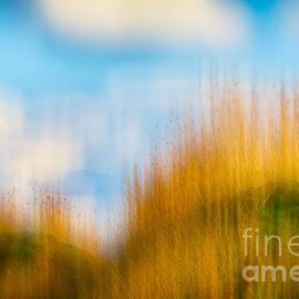 Weeds Under A Soft Blue Sky by Nick Biemans