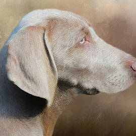 Weimaraner Adult - Painting by Ericamaxine Price