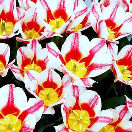 Debra Orlean - Welcome Mat of Tulips
