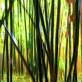 Rene Triay Photography - Welcome to the Bamboo Jungle