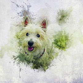 Ian Mitchell - West Highland White Terrier