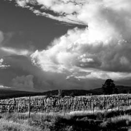 Westside Vineyard Weather Black and White by Allan Van Gasbeck