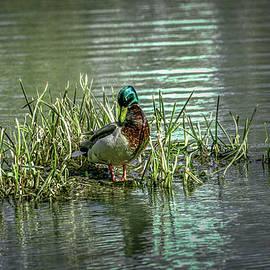 Leif Sohlman - Wet green #g2