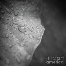Wet Kisses by Neha Gupta