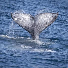Whale Love by David Millenheft