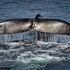 Whale Tail by Andrea Platt