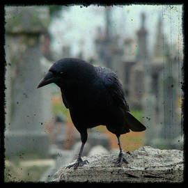 Gothicrow Images - What