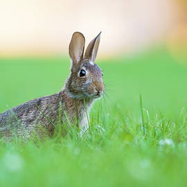 What's up Doc? by Mircea Costina Photography