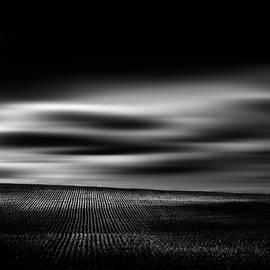 Wheat Abstract - Dan Jurak