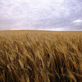 Wheat field and sky by Jeff Swan