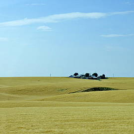 Wheat Fields in Eastern Washington State by Lyuba Filatova
