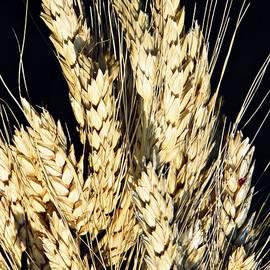 Sarah Loft - Wheat