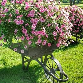 2004 - Wheel Barrow Full Of Flowers by Sheryl Sutter