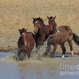 Rod Giffels - When a Horse Sees a Waterhole