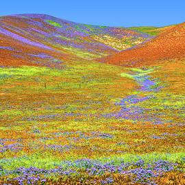 Lynn Bauer - When Flowers Carpet the Earth